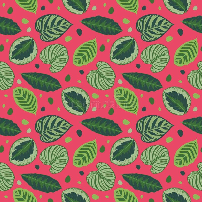 Безшовная яркая розовая графическая картина иллюстрации с зелеными тропическими листьями завода молитве Calathea иллюстрация штока