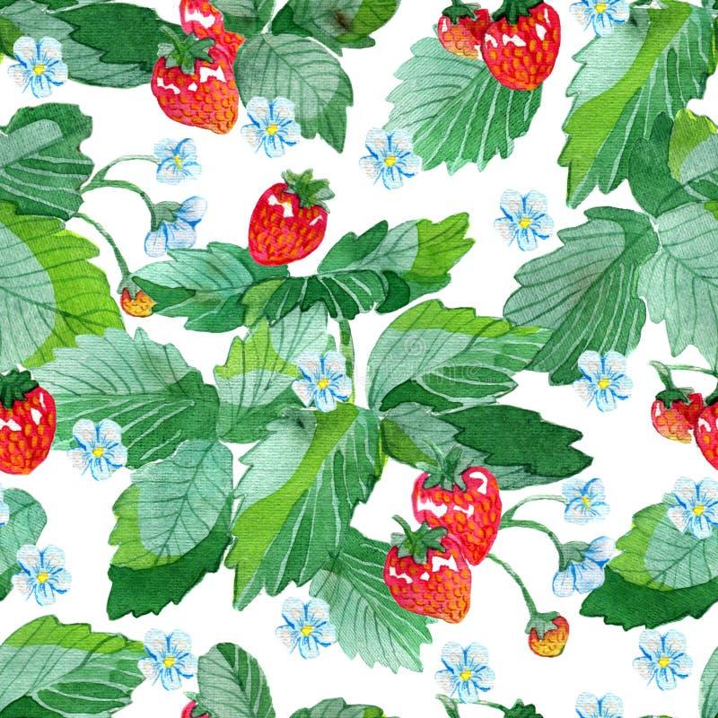 Безшовные картины с листьями клубники, цветками и зрелыми ягодами на белизне иллюстрация штока