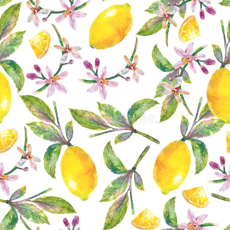 Безшовные лимоны картины с зелеными листьями, кусками лимона и цветками иллюстрация штока