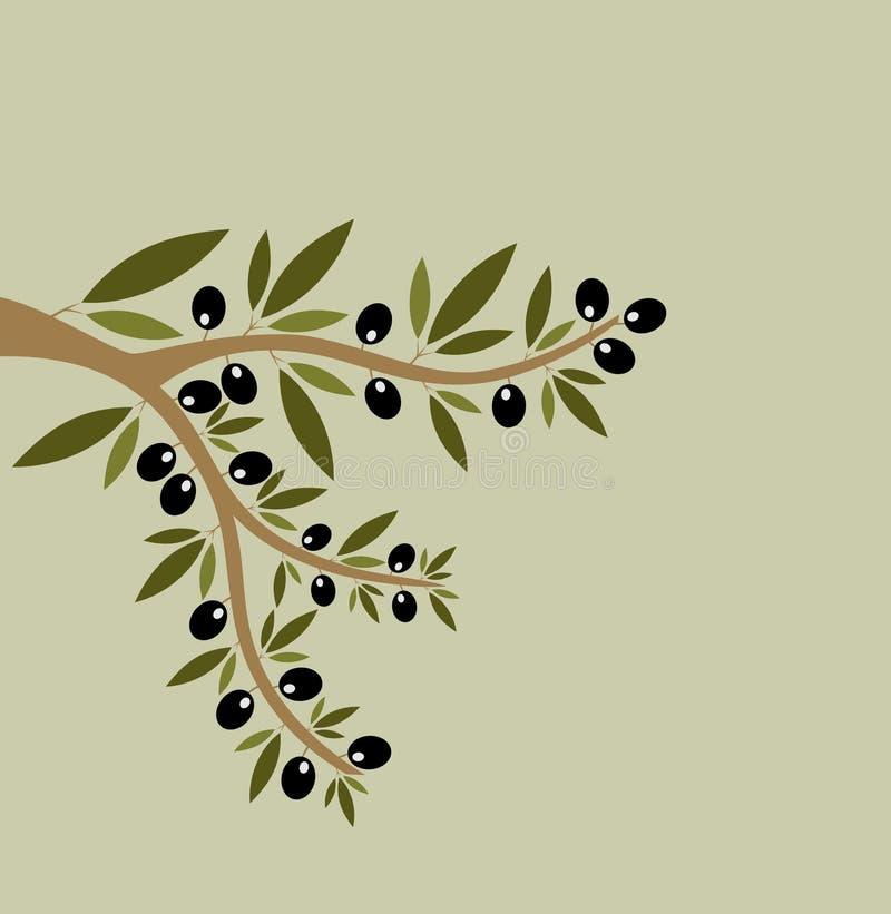 Безшовные оливковые ветки иллюстрация штока