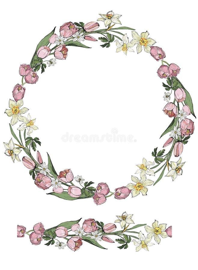 Безшовный венок щетки и вектора изолированный на белой предпосылке цветков пинка тюльпана, белых daffodils и компиляции ветрениц, иллюстрация штока
