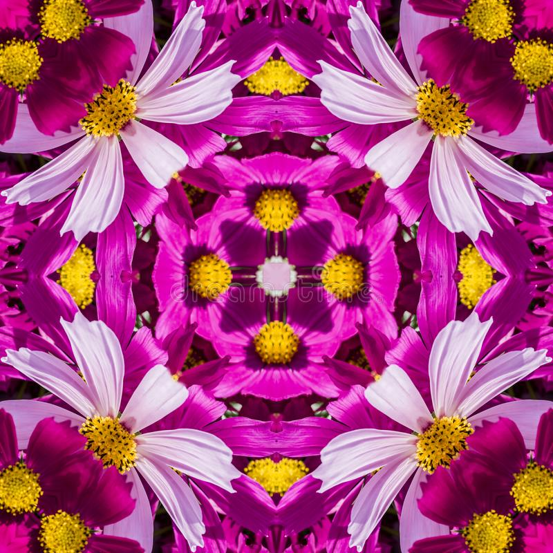 Безшовный геометрический цветочный узор розовых wildflowers стоковые изображения rf