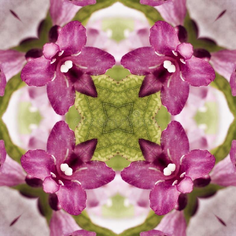 Безшовный геометрический цветочный узор розовых wildflowers стоковые фото