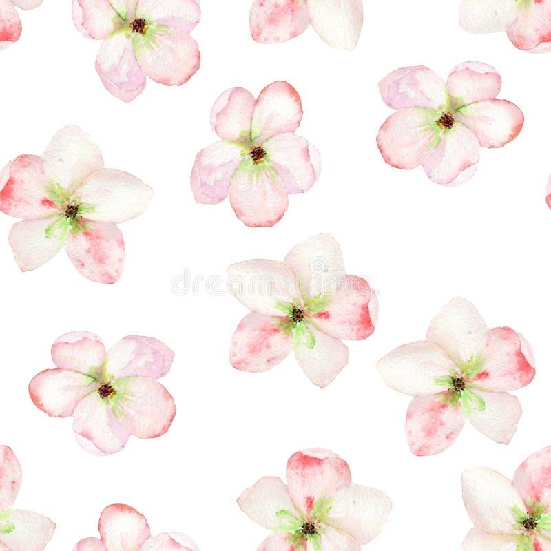 Безшовный цветочный узор при цветки нежной розовой яблони зацветая, покрашенные в акварели иллюстрация штока