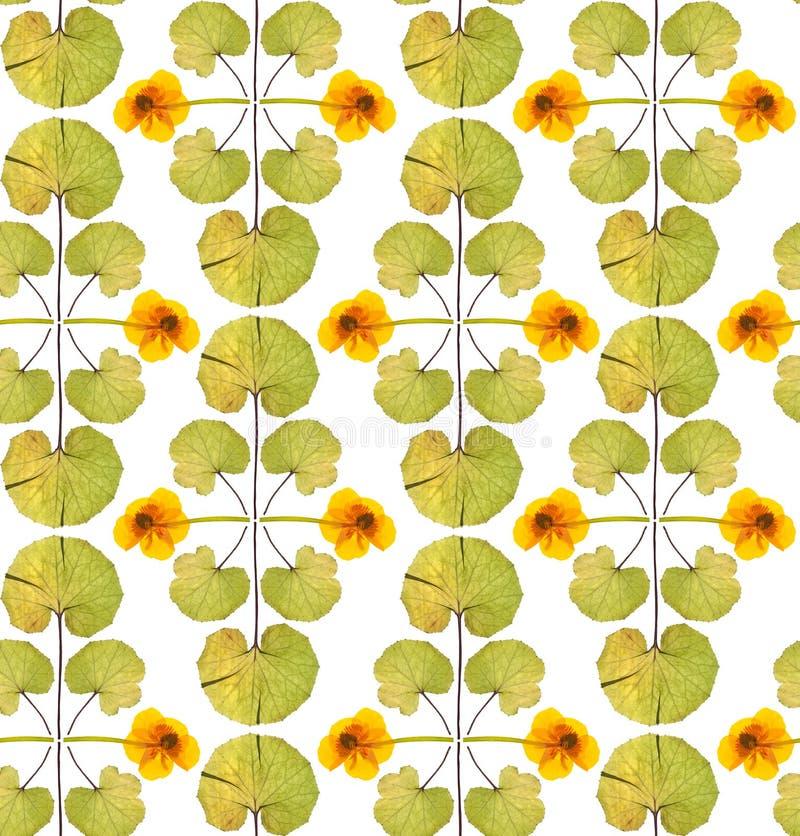 Безшовный цветочный узор с желтыми цветками стоковое изображение