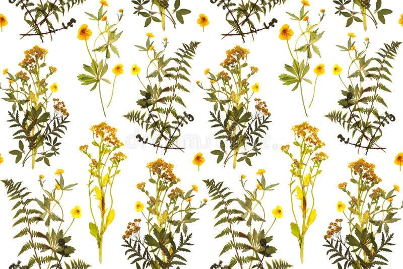 Безшовный цветочный узор с травами, желтыми цветками иллюстрация штока
