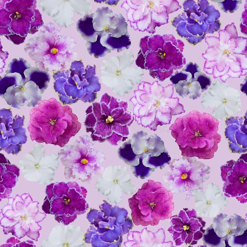 Безшовный цветочный узор фиолетов стоковые изображения