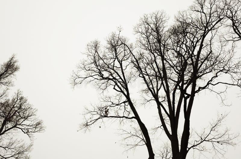 Безлистные чуть-чуть деревья над серой предпосылкой неба стоковые изображения rf