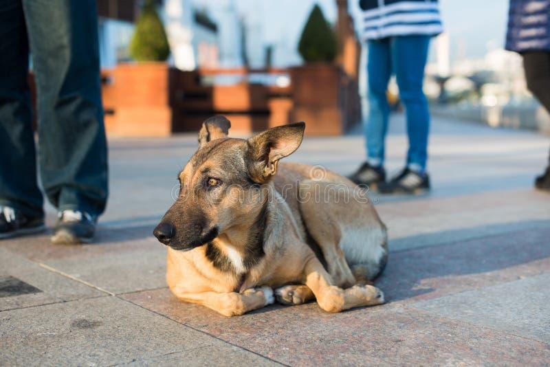 Бездомная собака в улице стоковое фото rf