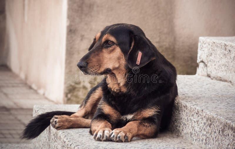 Бездомная собака улицы стоковые фотографии rf
