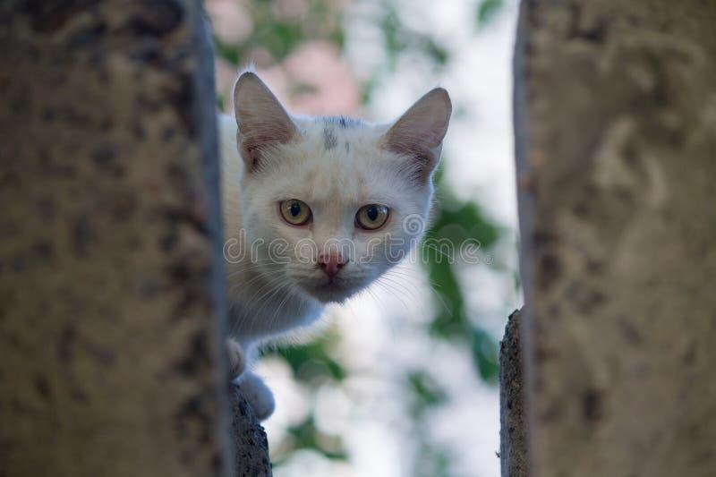 Бездомный белый кот peeking из прятать стоковая фотография