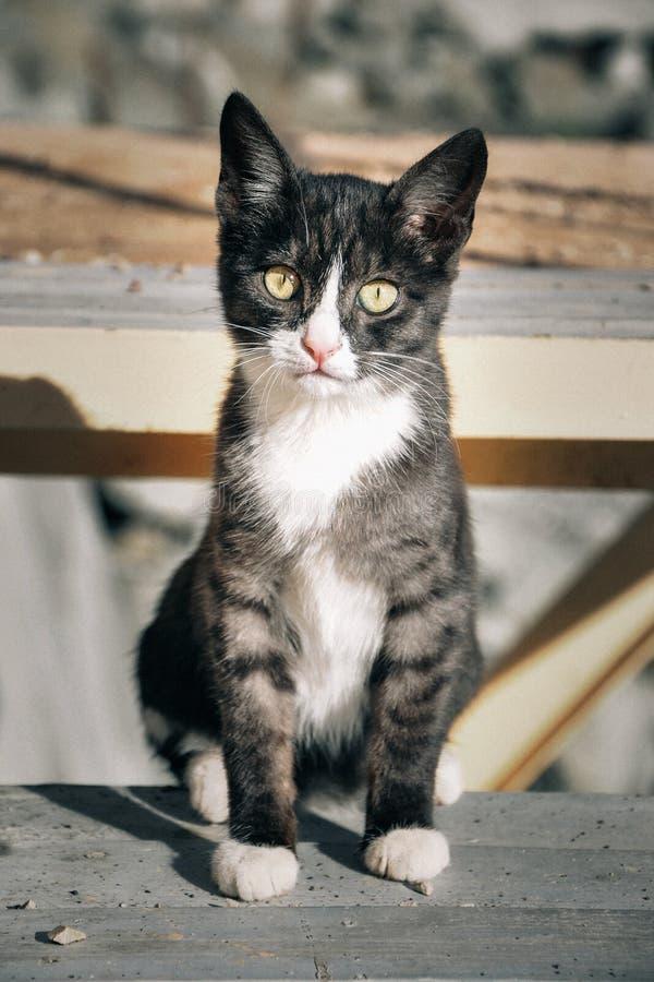 Бездомный котенок с унылыми глазами стоковое изображение
