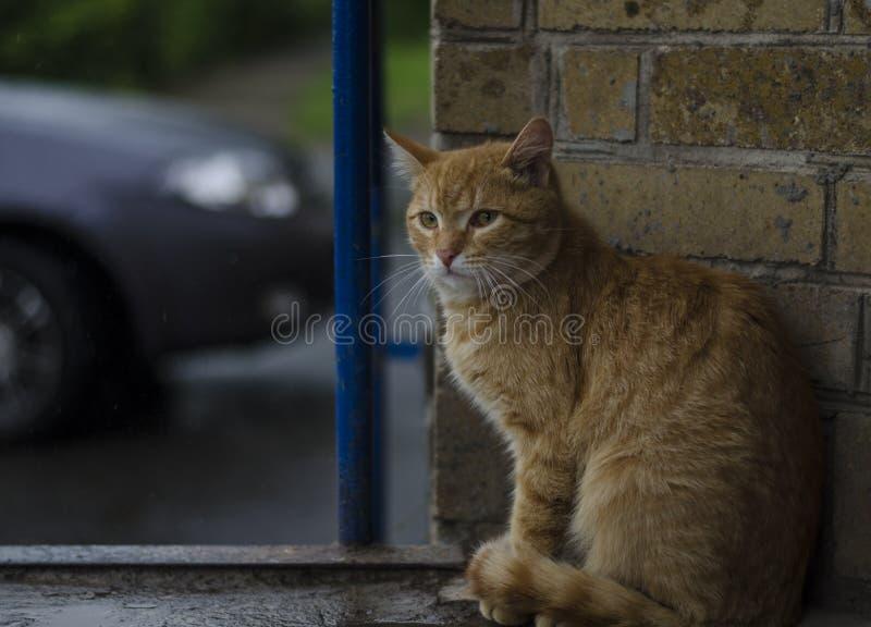 Бездомный кот сидит стоковая фотография rf