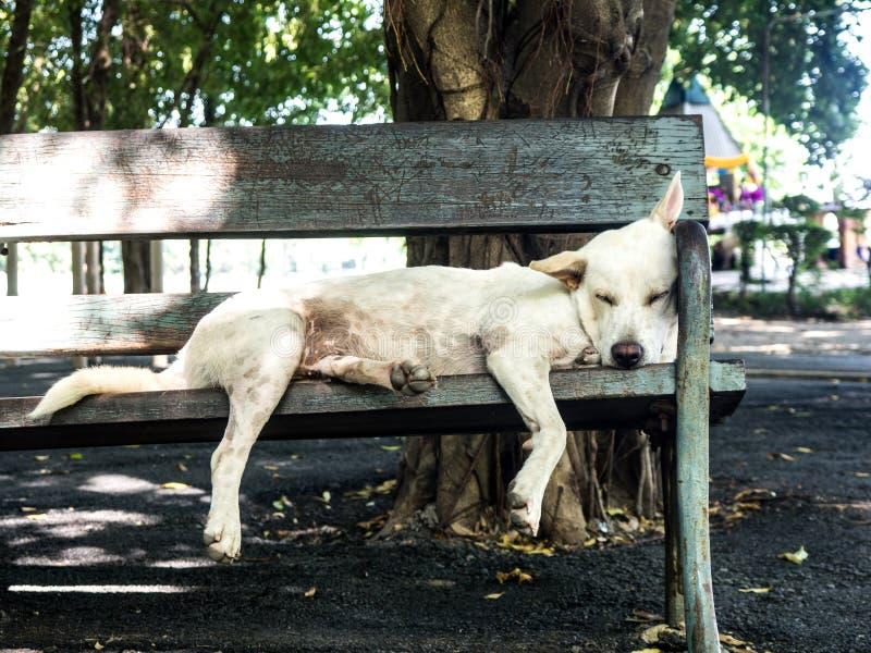 Белая бездомная собака лежа на стуле в саде стоковые изображения rf