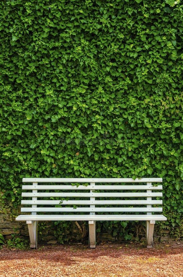 Белая деревянная скамья в парке стоковое фото rf