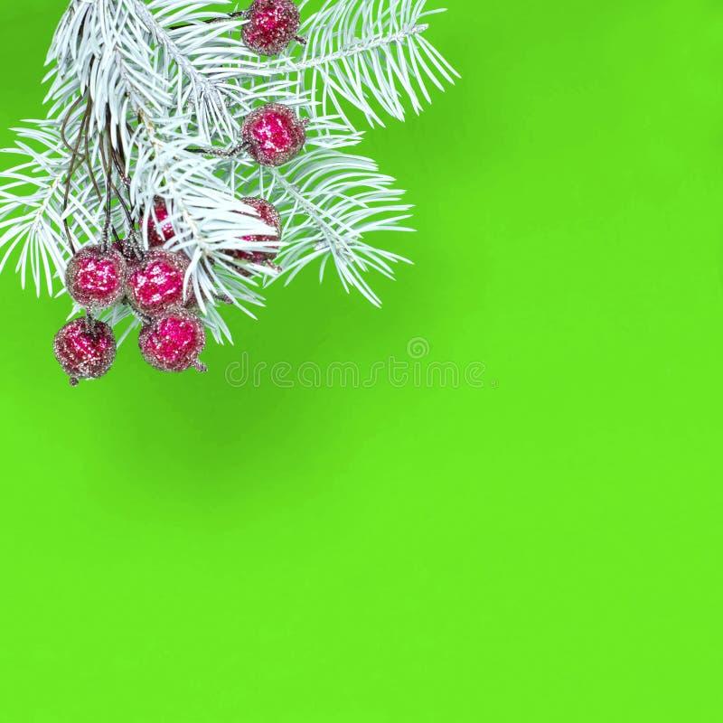 Белая елевая ветвь и покрытые снег красные ягоды Рождество conc стоковые изображения rf