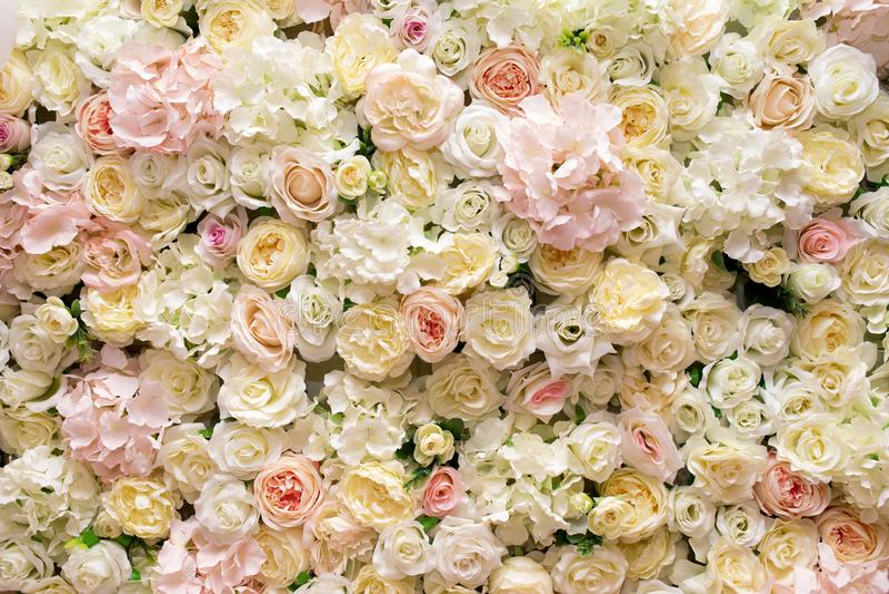 Белая желтая розовая предпосылка роз стоковое фото