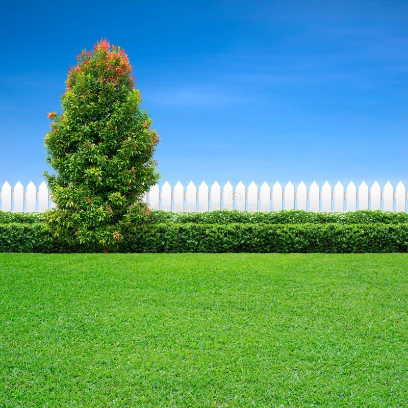 Белая загородка и зеленое дерево стоковое изображение