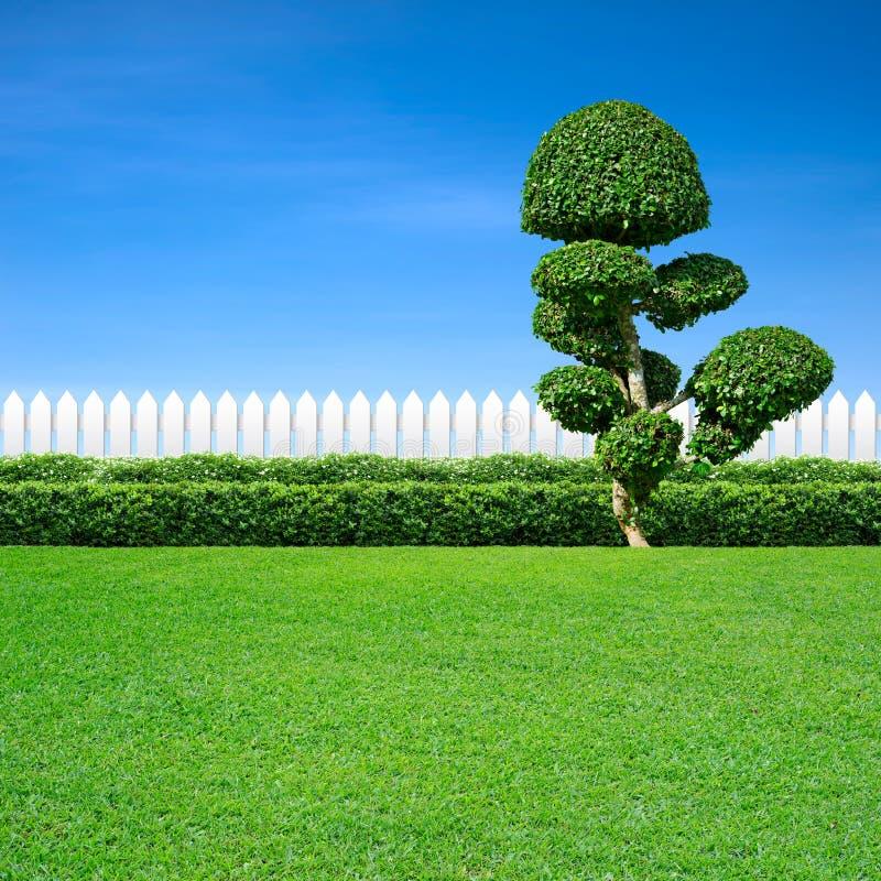 Белая загородка и орнаментальное дерево стоковые изображения rf
