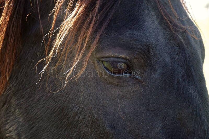 Белая лошадь в горе стоковые фотографии rf