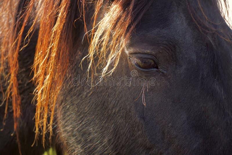 Белая лошадь в горе стоковая фотография rf
