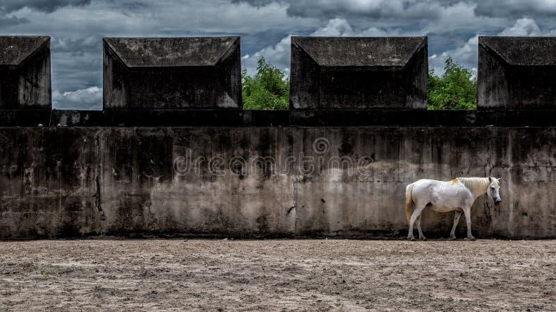 Белая лошадь перед белой стеной стоковые фото