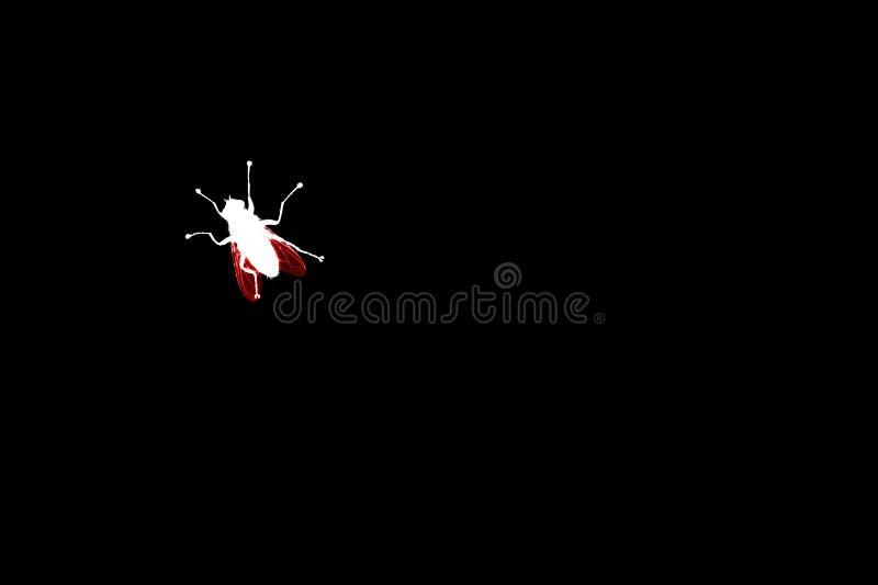 Белая муха с красным силуэтом крыльев на черной крупном плане изолированном предпосылкой, bloodsucking иллюстрации макроса насеко стоковая фотография