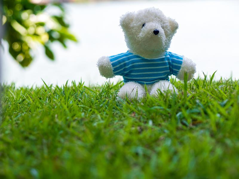 Белая носка плюшевого медвежонка голубая рубашка и сидеть на зеленой лужайке Предпосылка бела и имеет космос экземпляра для содер стоковое фото rf