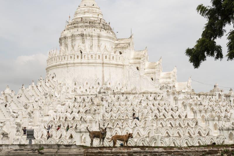 Белая пагода Hsinbyume Paya, Mingun myanmar стоковые изображения rf