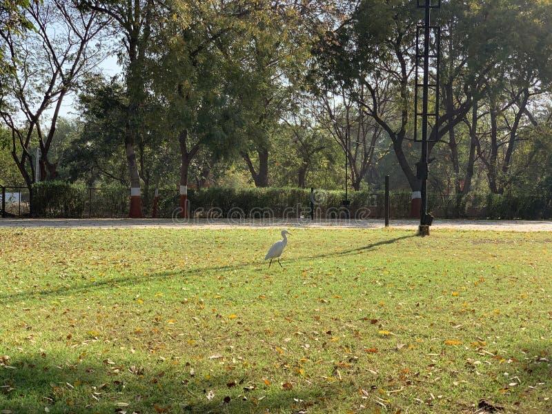 Белая птица стоковое изображение
