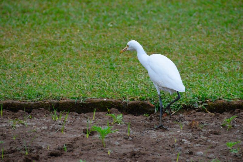 Белая птица стоковые фото