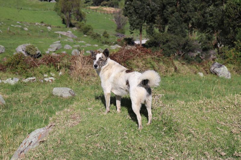 Белая собака на камне стоковое фото rf