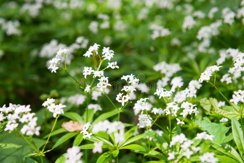 Белая текстура полевых цветков стоковые изображения rf