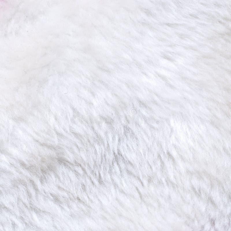 Белая текстура шерсти стоковые изображения
