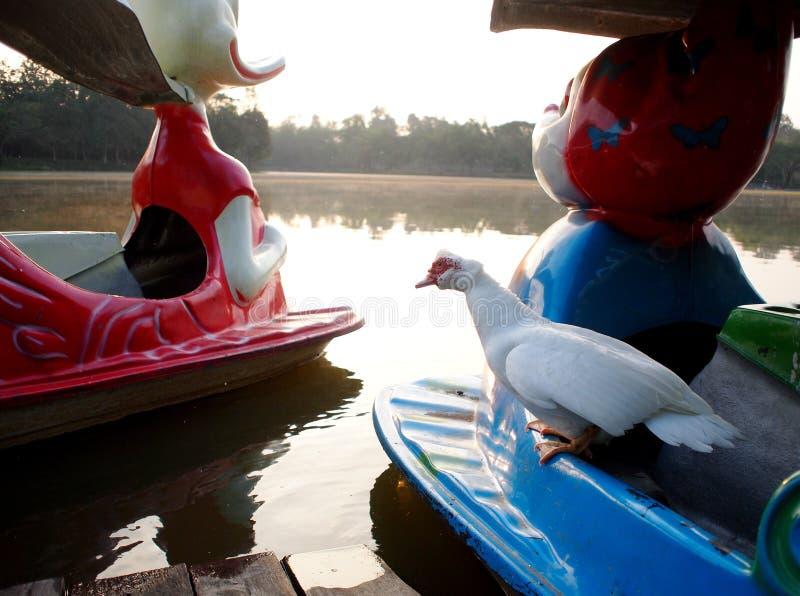 Белая утка отдыхая на красочной пластичной шлюпке затвора стоковые фото