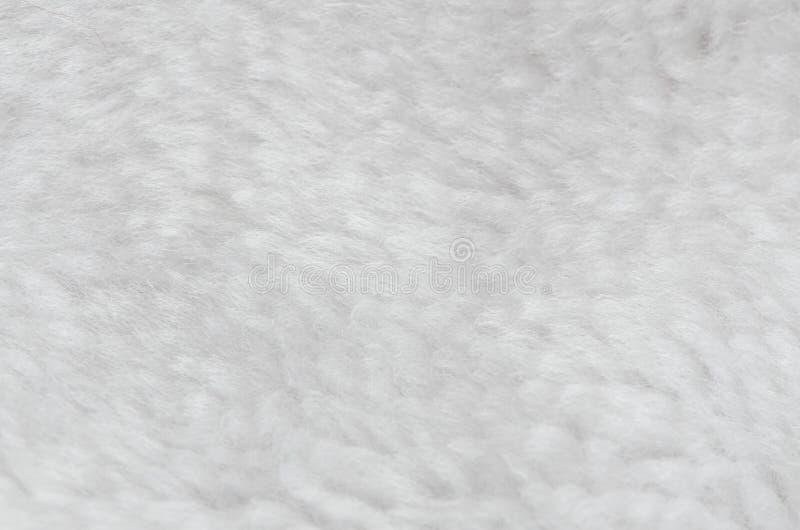 Белая шерсть стоковые фото