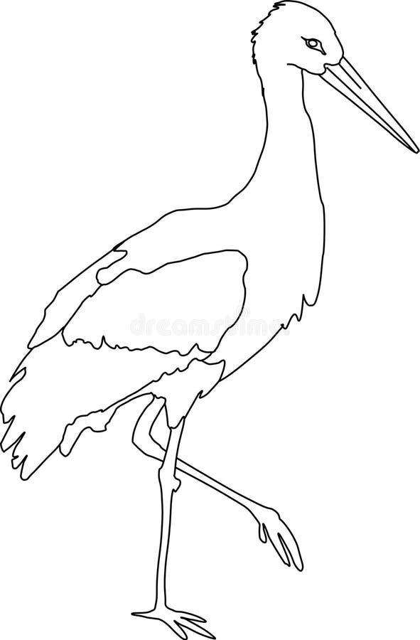 белизна аиста иллюстрация вектора