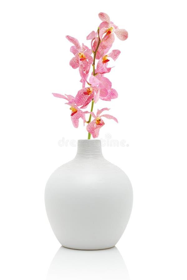 белизна вазы орхидеи розовая стоковые фотографии rf