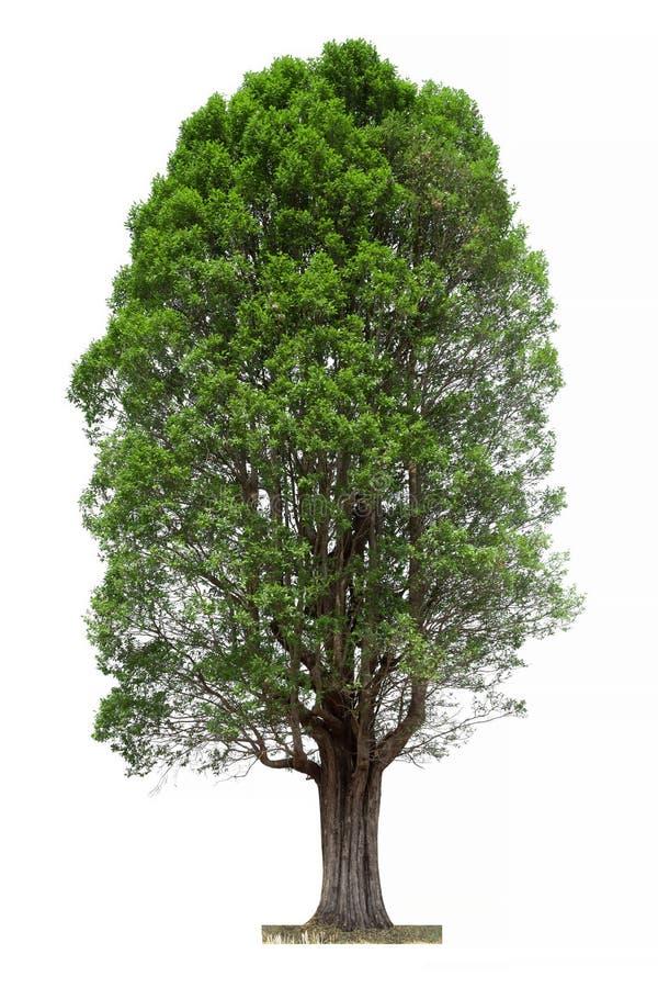 белизна вала предпосылки изолированная зеленым цветом стоковая фотография rf
