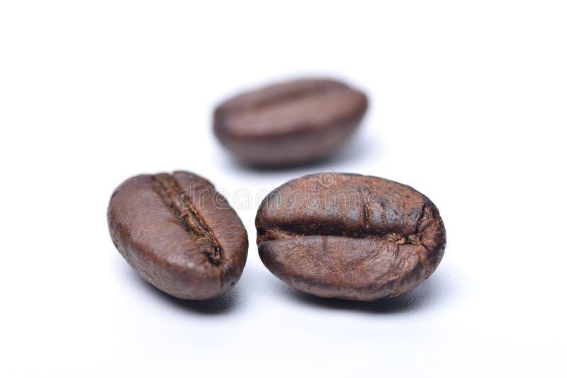 белизна вектора кофе фасолей предпосылки зажаренная в духовке иллюстрацией стоковое фото rf