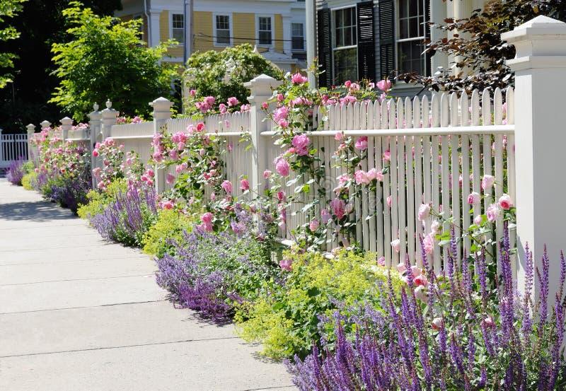 белизна весны роз загородки последняя стоковые фотографии rf