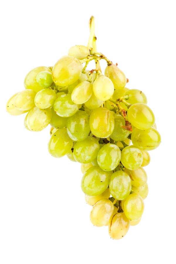 белизна виноградин изолированная зеленым цветом стоковая фотография
