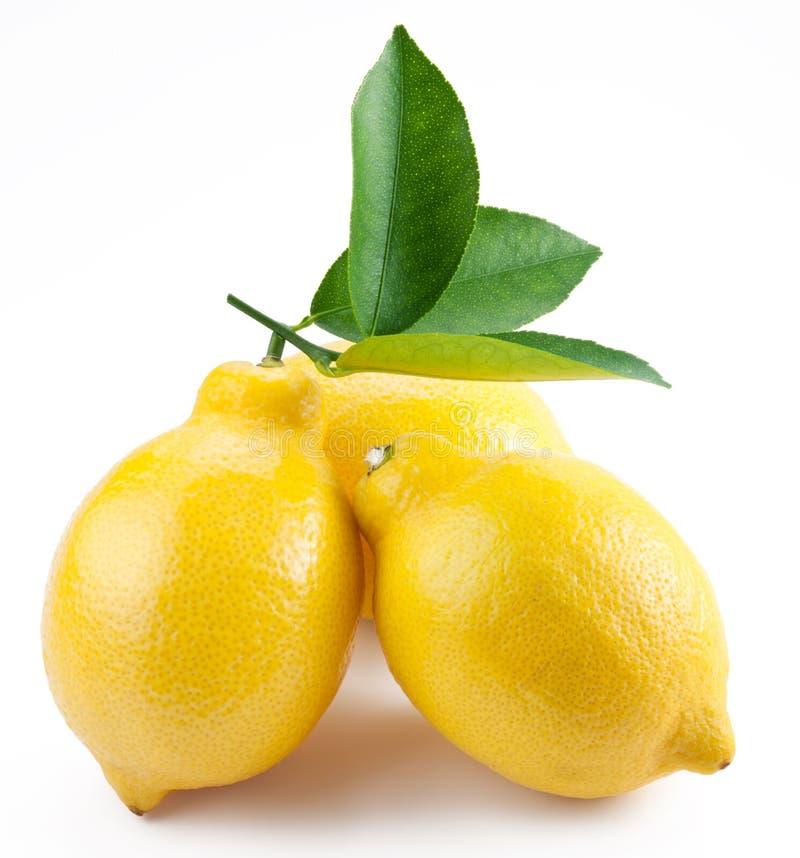 белизна высокого качества фото лимонов зрелая стоковое фото rf