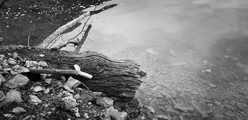 Белизна журнала текстуры древесины смещения полностью черная стоковая фотография rf