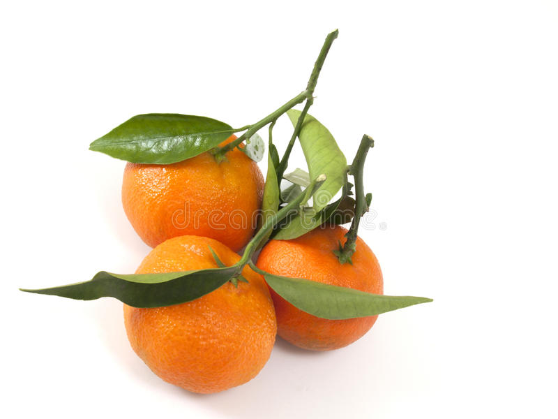 белизна заднего clementine цитруса естественная стоковые изображения rf