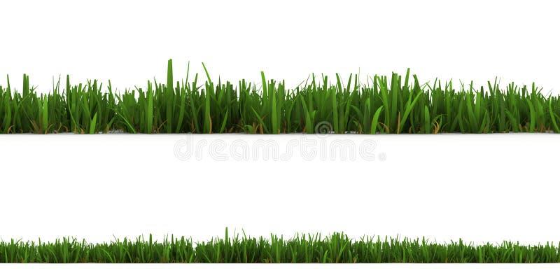 белизна изолированная травой иллюстрация вектора