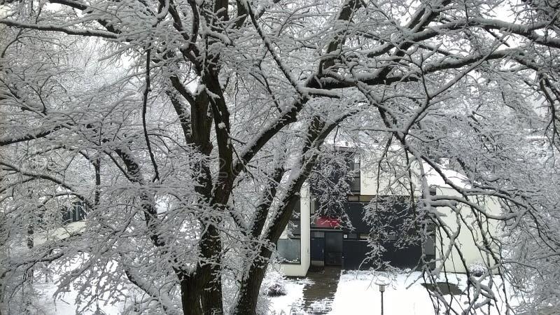 Белизна как снег стоковые изображения rf