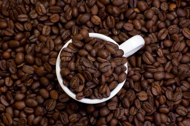 белизна кофейной чашки круга фасолей стоковые изображения rf