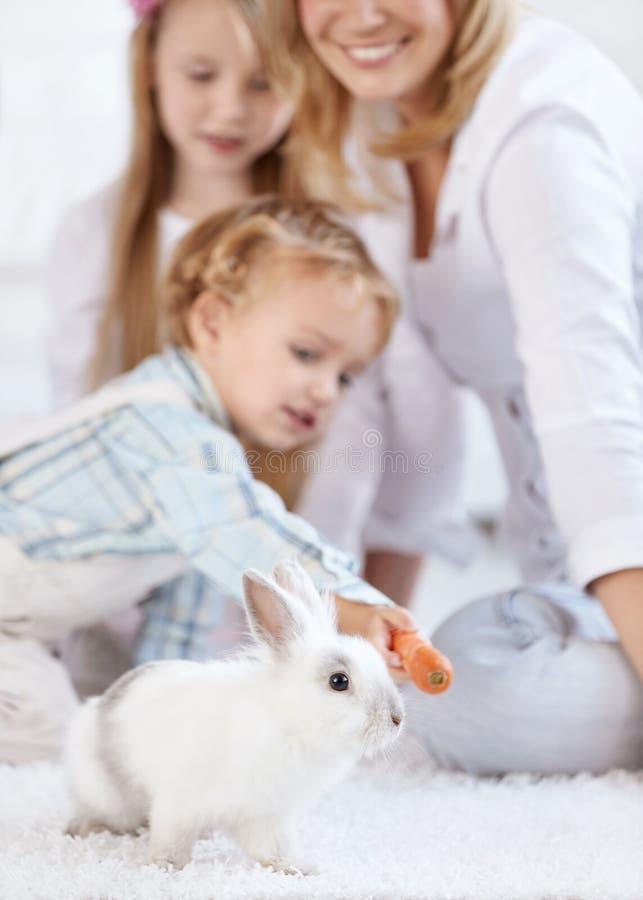белизна кролика семьи маленькая стоковые фотографии rf
