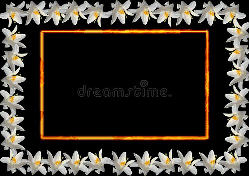 белизна лилии рамки стоковая фотография rf